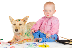 Pet Stain and Odor Removal North Hollywood, CA